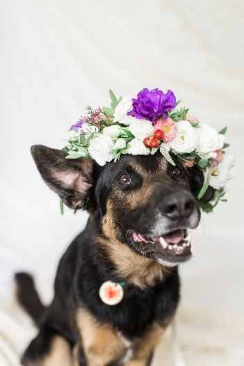 Adopt A Dog, Save A Life with Blush & Bloom